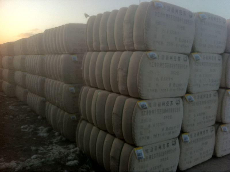 2011新产137长绒棉-带票